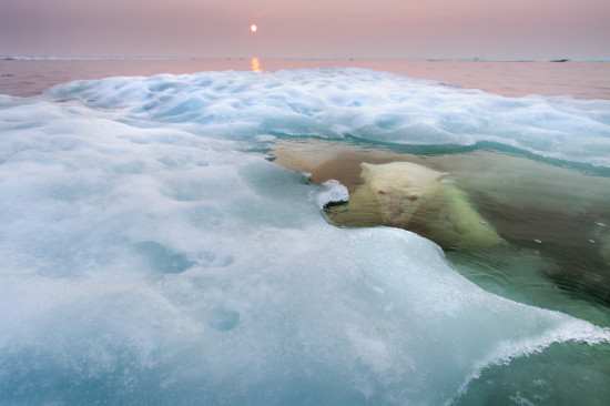 28_Paul-Souders-(USA)-The-water-bear