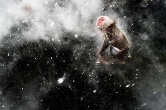 83_Jasper-Doest-(The-Netherlands)-Snow-moment